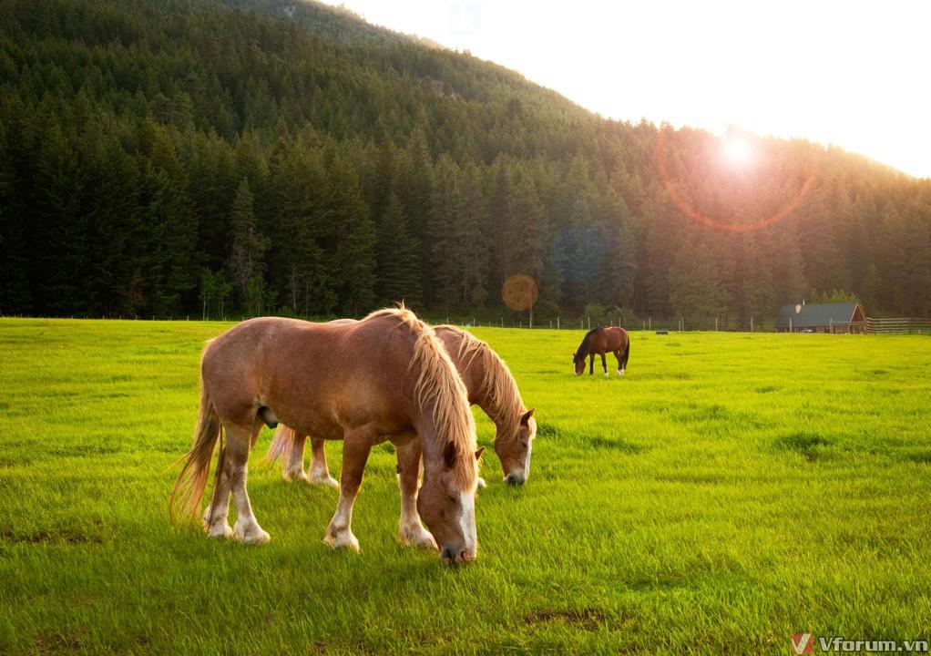 Những giống ngựa phổ biến nhất trên thế giới