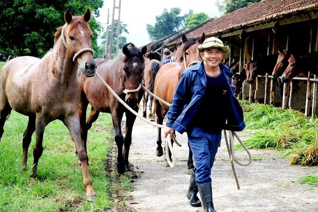 Chiêm ngưỡng đàn ngựa cứu người ở trại Suối Dầu